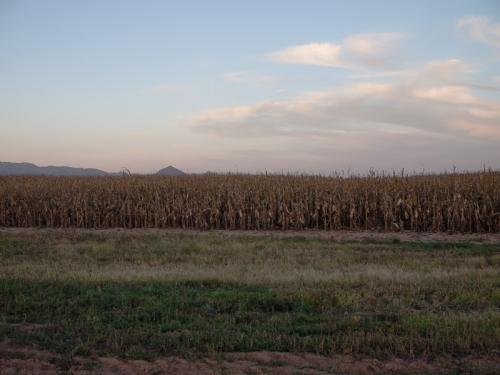 fall-fields-3